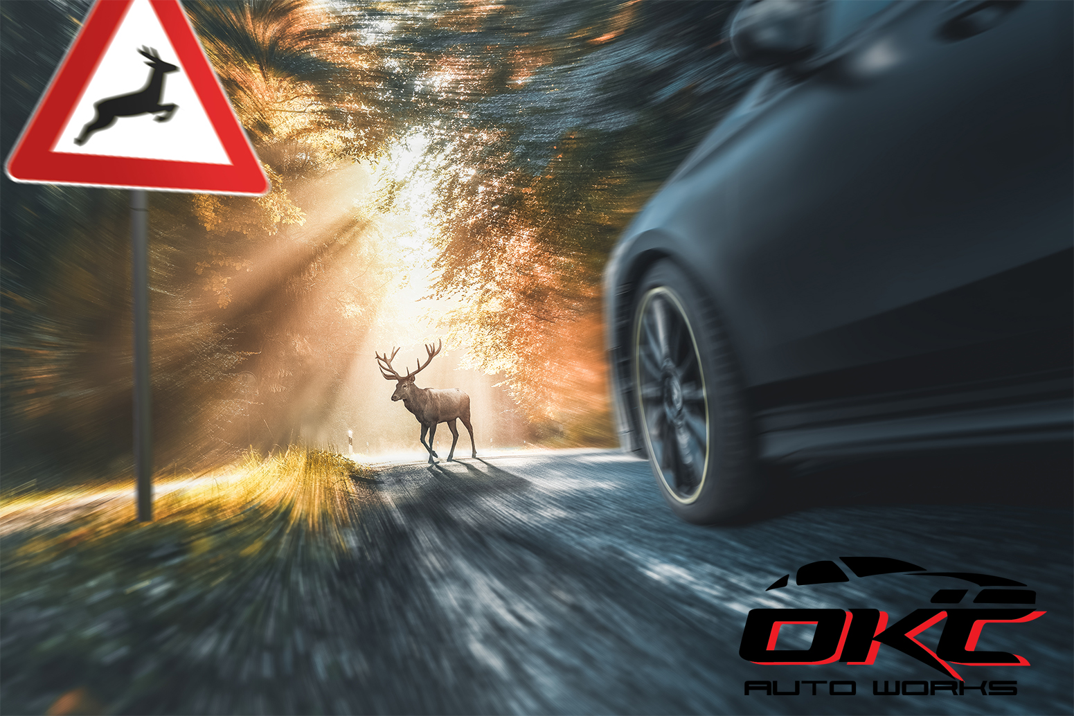 deer related auto accidents, deer hits, deer-related car crash, watch our for deer when driving,, how to avoid hitting a deer, how to hit a deer, what to do if you have hit a deer